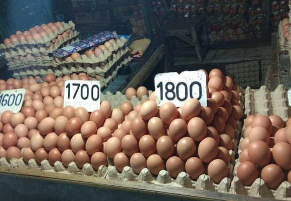 harga telur ayam ras di Gorontalo mengalami penurunan
