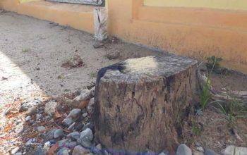 Tebang Pohon di Kota Gorontalo